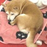 コーホーのマスコット犬、マリモ。