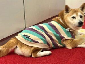 【2021.4.19】コーホーのアイドル犬 マリモ