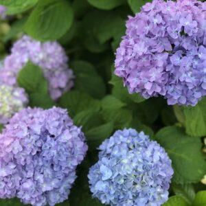 【2021.5.30】季節のお花シリーズ
